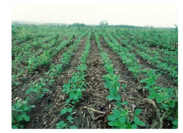 Vendo Fazenda Centro do Maranhão com excelente localização,terra teor argila 40/55% - Foto 12