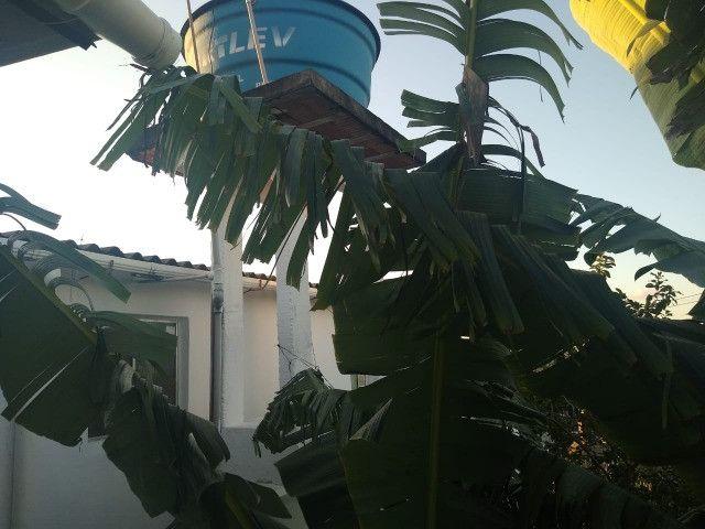 Vende Casa Sucupira - Foto 7
