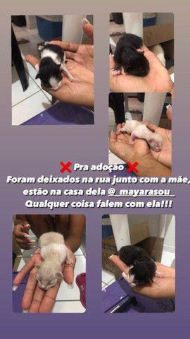 Gatinhos  - Foto 6