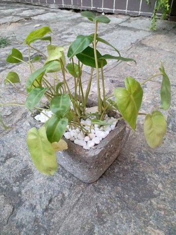 Plantas com jarro feito a mão - Foto 5