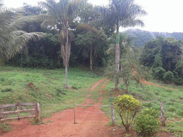 Sítio à venda com 3 dormitórios em Zona rural, Piranga cod:13135 - Foto 15