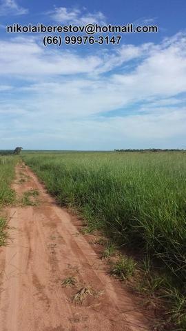 Fazenda 832 hectares paranatinga mt nikolaiimoveis