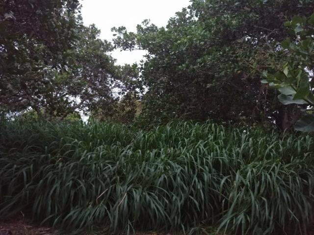Granja com 8.8 hectares próximo da reta tabajara - Foto 17