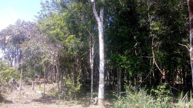 Terreno em Trancoso e Itaipu de dentro - Foto 5