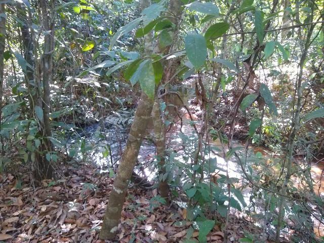 Sítio com rio - Foto 2