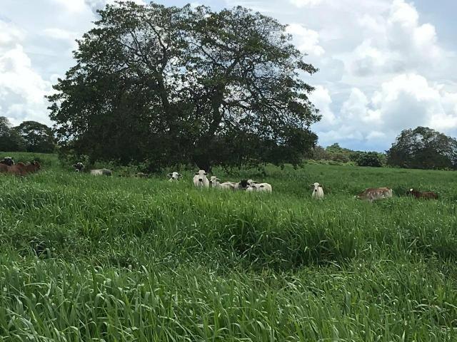 Fazenda com 480 hectares a 60 km de natal - Foto 10
