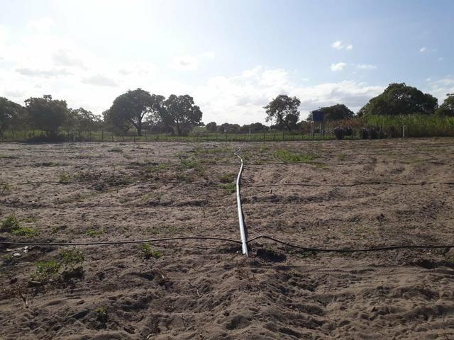 Granja estruturada em lagoa salgada 100% irrigada - Foto 5