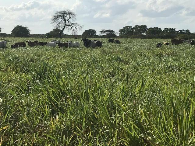 Fazenda com 480 hectares a 60 km de natal