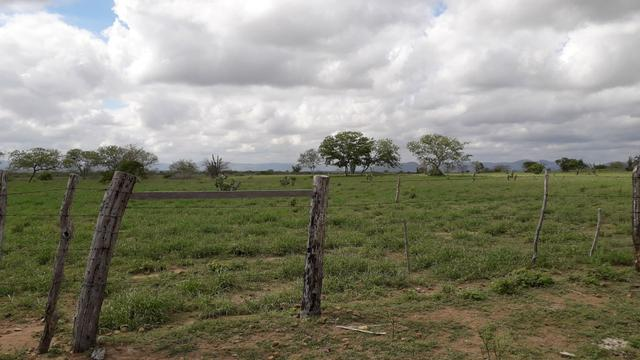 Fazenda em Iaçu-Ba - Foto 9