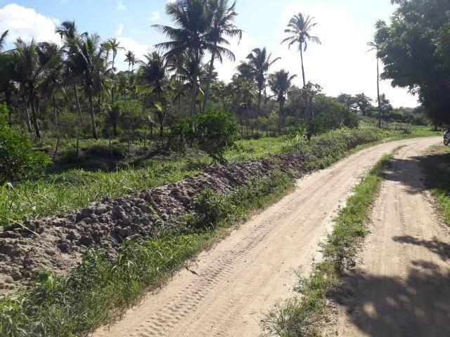 Ótima propriedade de 1.5 hectare, a 7 km da BR de Pombos-PE - Foto 12