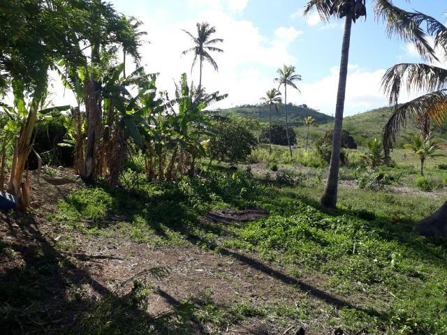 Ótima propriedade de 1.5 hectare, a 7 km da BR de Pombos-PE - Foto 3
