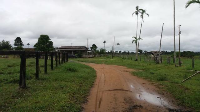 Fazenda - Porto Belo Linha 120 - 900 hectares - Foto 16