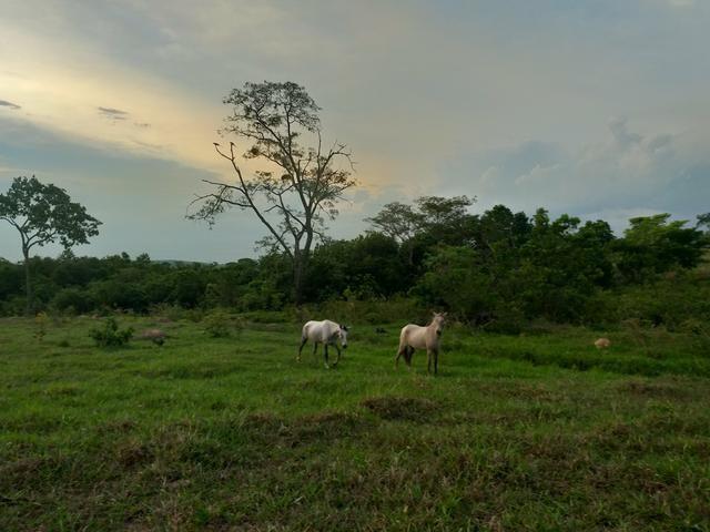 Fazenda com 2 nascentes 8 pasto 5 represas.a 28 km de caldas novas.Go - Foto 4
