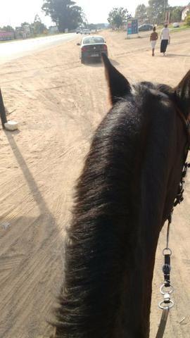 Vendo cavalo emciliado - Foto 2