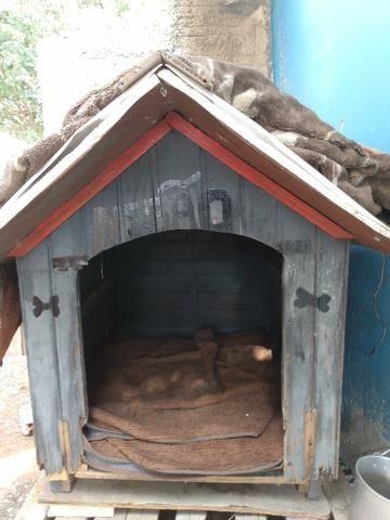 Vendo casa cachorro grande