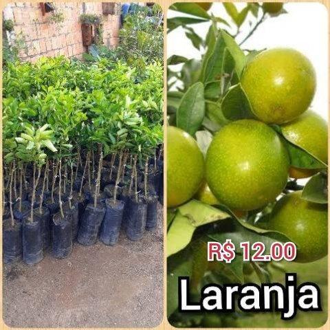 Plantas frut - Foto 5