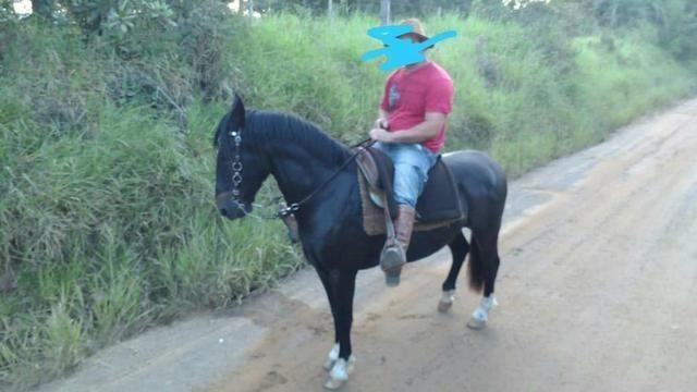 Vendo cavalo emciliado - Foto 5