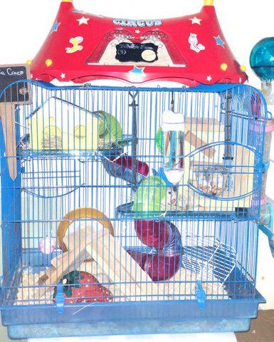 Filhotes de Roedores Hamster - Foto 2