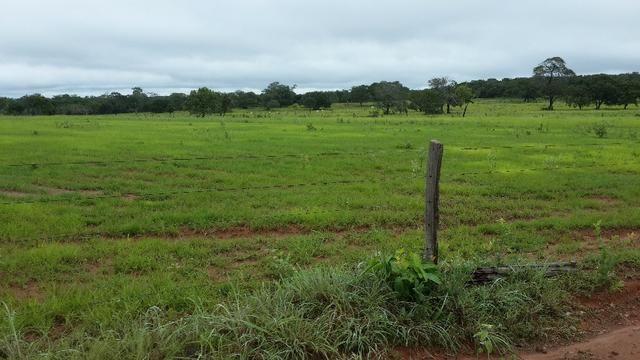 Fazenda 110 alq. 32km de araguaína