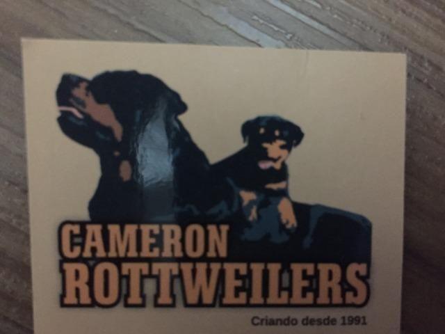 Filhotes machos Rottweiler - Foto 6