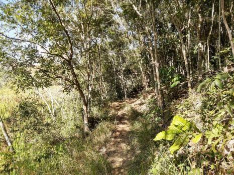 676 - Área de terra no Bugre de 29 hectares - Foto 3