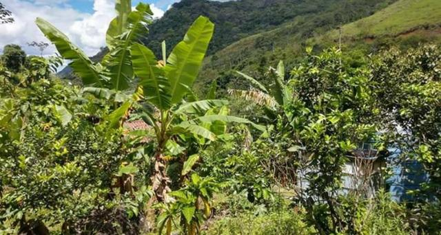 Sitio em Conceição de Macabu - Foto 12