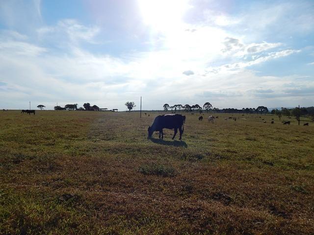 Fazenda de 52 alqueires com represa na divisa (Nogueira Imóveis Rurais) - Foto 8