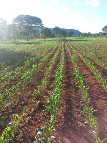 Fazenda 2.686 hectares em ARINOS MG - Foto 17