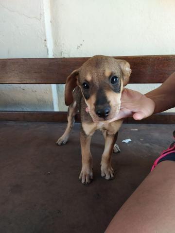 Cachorrinho MACHO para doação responsável! FACILITO ENTREGA!!!! - Foto 2