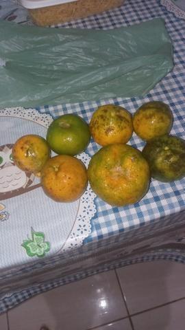 Laranja tangerina