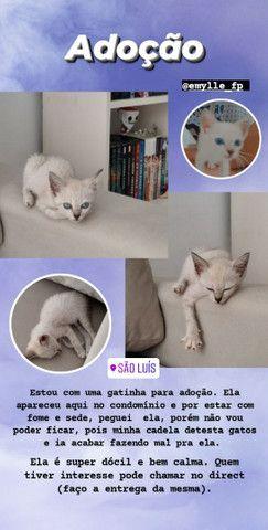 Gatinha filhote para adoção (gato para adoção- fêmea) - Foto 5