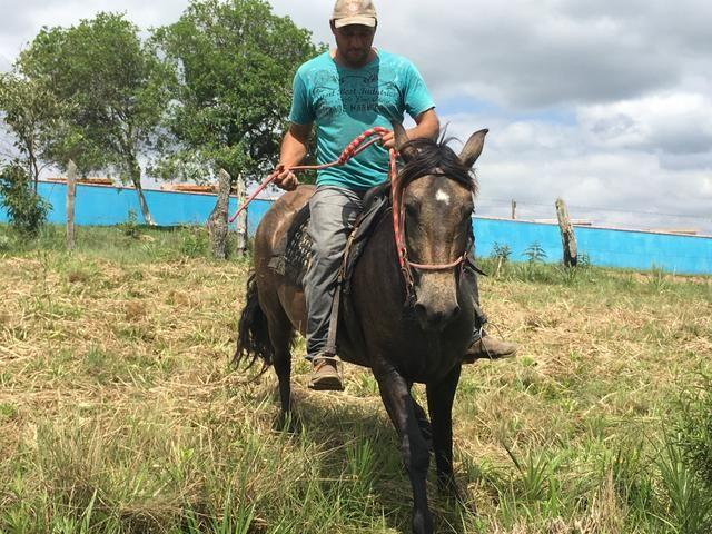 Égua crioula! - Foto 3