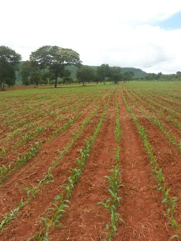 Fazenda 2.686 hectares em ARINOS MG - Foto 16