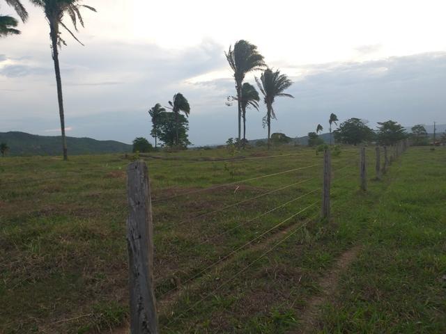 Fazenda com 2 nascentes 8 pasto 5 represas.a 28 km de caldas novas.Go - Foto 2