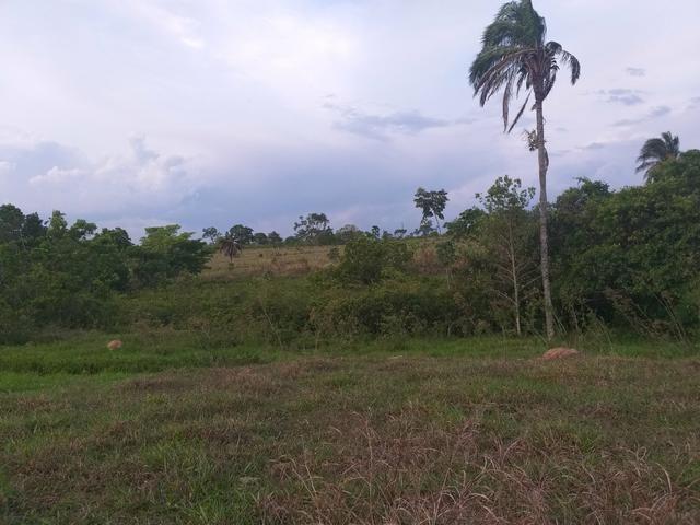 Fazenda com 2 nascentes 8 pasto 5 represas.a 28 km de caldas novas.Go - Foto 5