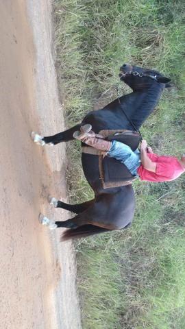 Vendo cavalo emciliado