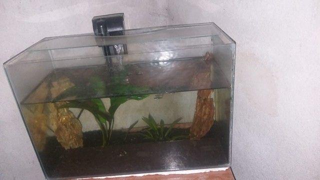 Vendo esse aquário completo - Foto 2