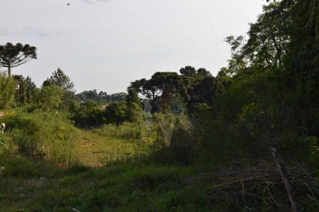Terreno para alugar, 3100 m² por r$ 3.900/mês - santa felicidade - curitiba/pr - Foto 6