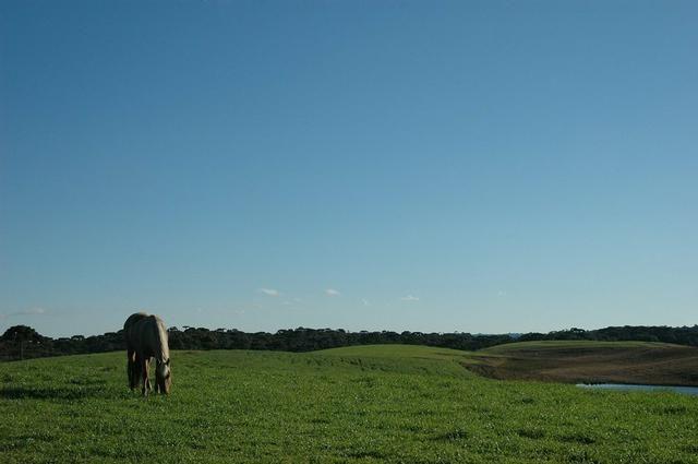 As Melhores áreas para pecuária e agricultura nos Campos de Cima da Serra