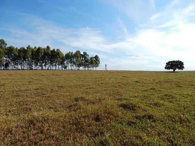 Fazenda de 52 alqueires com represa na divisa (Nogueira Imóveis Rurais) - Foto 11