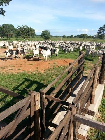 Fazenda 2.686 hectares em ARINOS MG - Foto 19