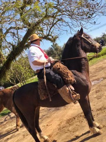 Vendo cavalo emciliado - Foto 4