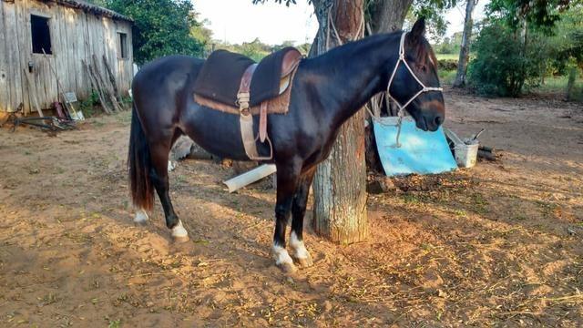 Vendo cavalo emciliado - Foto 3