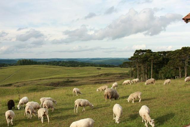 As Melhores áreas para pecuária e agricultura nos Campos de Cima da Serra - Foto 2