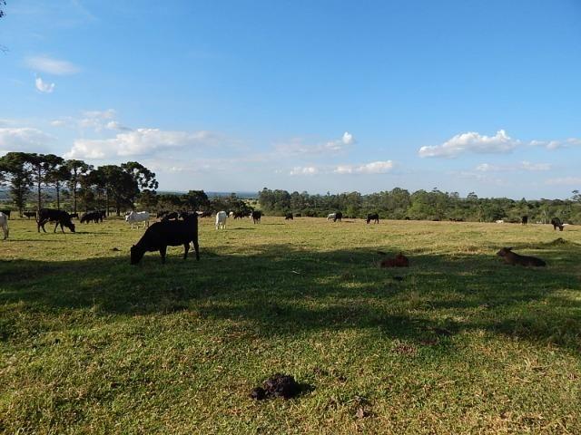 Fazenda de 52 alqueires com represa na divisa (Nogueira Imóveis Rurais) - Foto 14