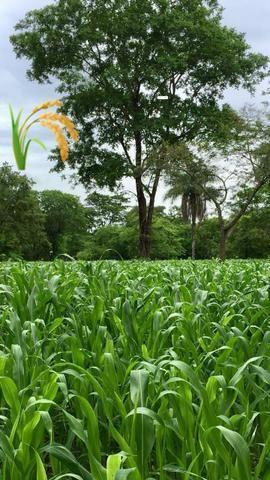 Fazenda 2.686 hectares em ARINOS MG - Foto 5