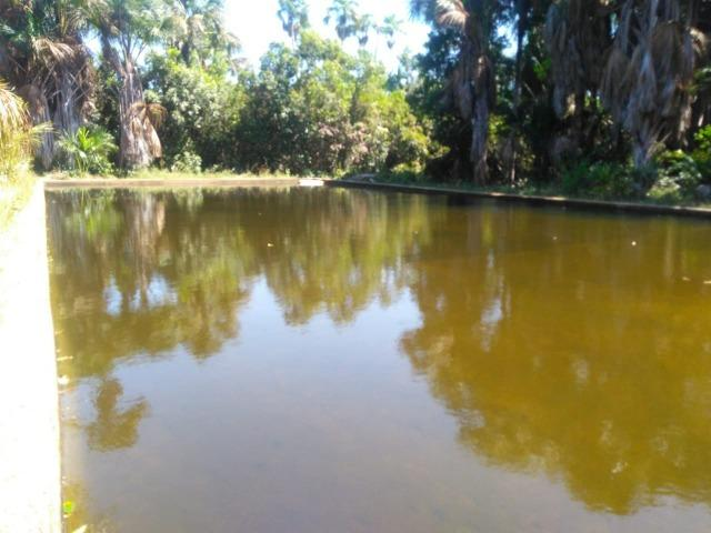 Sitio de 20 hectares, rico em água ótima casa sede e apenas 20 km de Teresina - Foto 16
