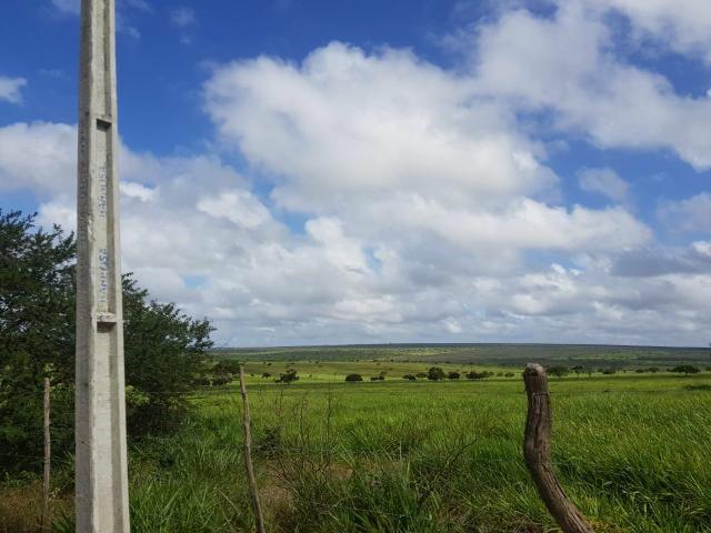 5000 hectares ideal para Plantação com Escritura pública - Foto 2