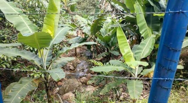 Sitio em Conceição de Macabu - Foto 11