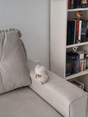 Gatinha filhote para adoção (gato para adoção- fêmea) - Foto 3